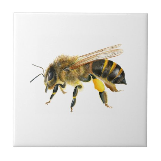 Honey Bee Watercolour Painting Artwork Print Small Square