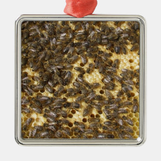 Honey Bees everywhere Christmas Ornament