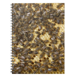 Honey Bees everywhere Note Book