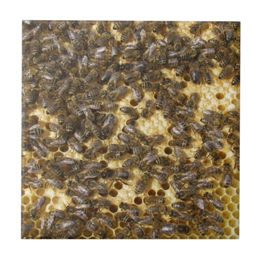 Honey Bees everywhere Small Square Tile