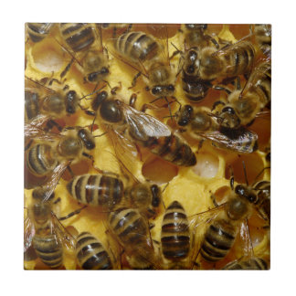 Honey Bees in Hive with Queen in Middle Tile