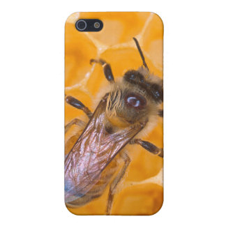 Honeybee as Art Cover For iPhone 5