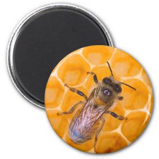 Honeybee as Art Fridge Magnet