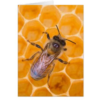 Honeybee as Art Greeting Card