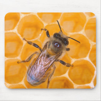 Honeybee as Art Mouse Mat