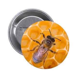 Honeybee as Art Pinback Buttons