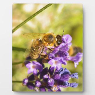 Honeybee Display Plaque