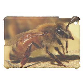 Honeybee iPad Mini Covers