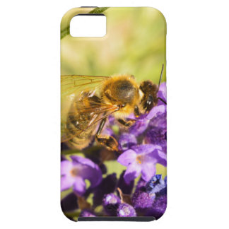 Honeybee iPhone 5 Case