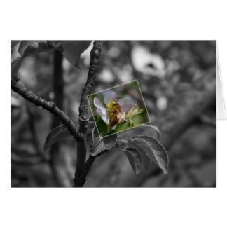 Honeybee on a Blossom Card