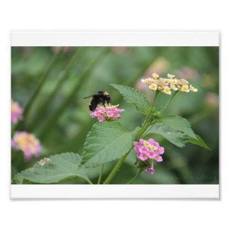 Honeybee on a Flower Photo