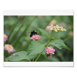 Honeybee on a Flower Photo Print
