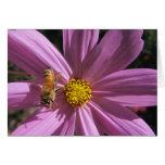 Honeybee on Cosmos Greeting Card