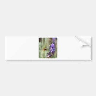 Honeybee on Lavender Bumper Stickers