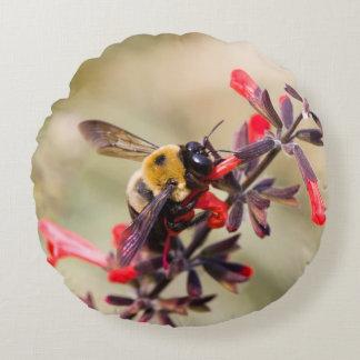 Honeybee on red salvia pillow