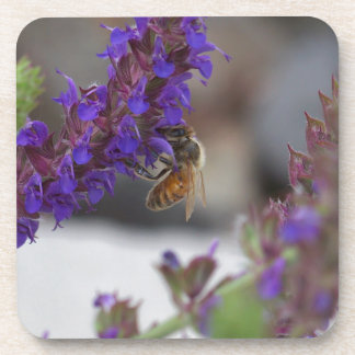 Honeybee on Salvia Beverage Coaster