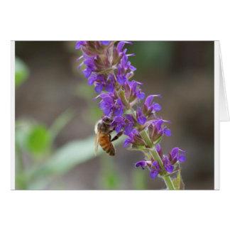 Honeybee on Salvia Greeting Card