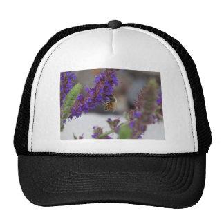 Honeybee on Salvia Trucker Hats