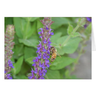 Honeybee on Salvia Officinalis Greeting Cards