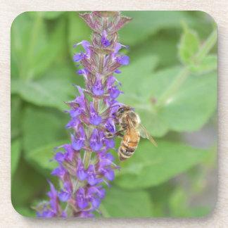 Honeybee on Salvia Officinalis Drink Coaster