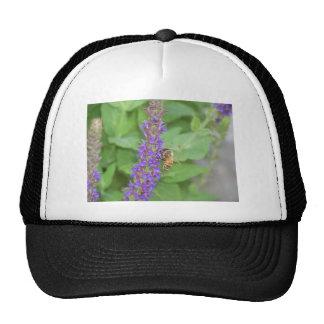 Honeybee on Salvia Officinalis Mesh Hat