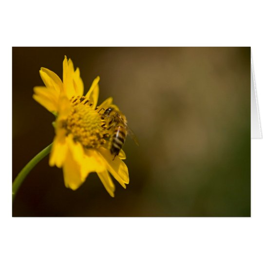 Honeybee on Yellow Flower Card