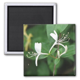Honeysuckle Fridge Magnets