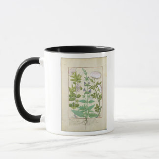 Honeysuckle, Sage and Rose Mug