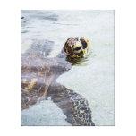 Honu Hawaiian Sea Turtle - Hawaii Turtles