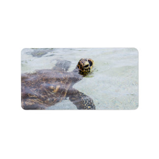 Honu Hawaiian Sea Turtle - Hawaii Turtles Label