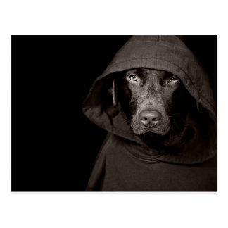 Hooded Labrador Post Cards