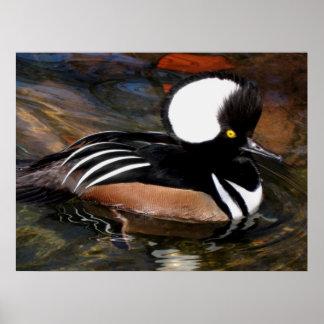 Hooded Merganser Bird Print