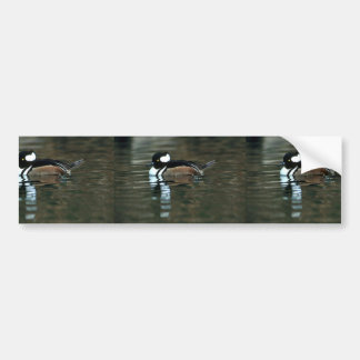 Hooded Merganser (Drake) Bumper Sticker