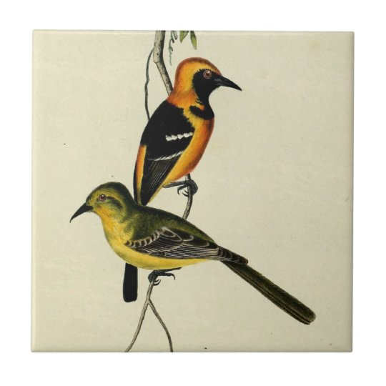 Hooded Oriole Small Square Tile