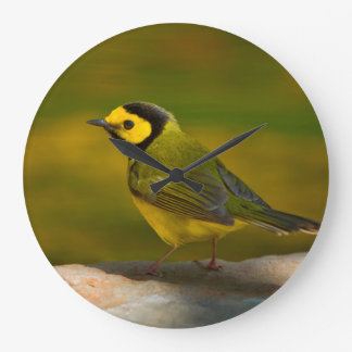 Hooded Warbler (Wilsonia Citrina) Adult Male Large Clock