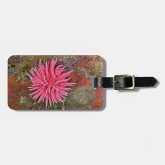 Hopkins Rose Nudibranch Luggage Tag