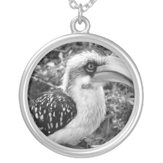 Hornbill bird close up looking at camera bw round pendant necklace