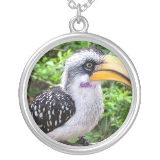 Hornbill bird close up looking at camera round pendant necklace