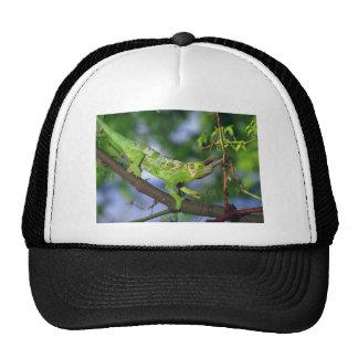 horned chameleon cap