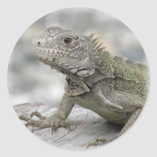 Horned Iguana Sicker Classic Round Sticker