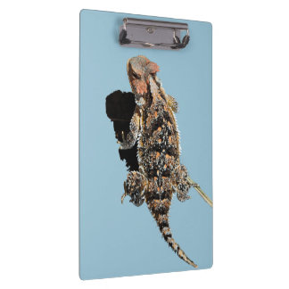 Horned Lizard Clipboard
