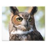 Horned Owl Photo Art