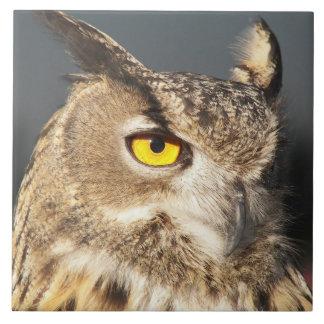 Horned Owl Photo Tile