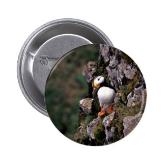 Horned Puffin, Hall Island 6 Cm Round Badge