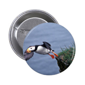 Horned Puffin Hall Island Buttons