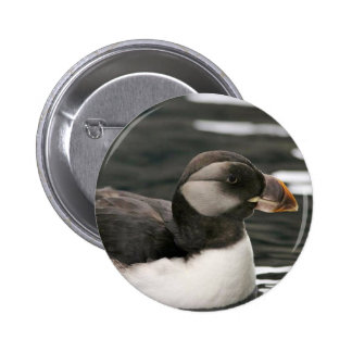 Horned Puffin in Winter Plumage Buttons