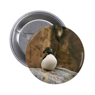 Horned Puffin in Winter Plumage Pin