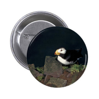 Horned Puffin on Hall Island Pinback Buttons