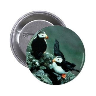Horned Puffin Pair on Rocks Pinback Buttons