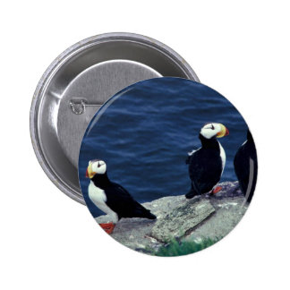Horned Puffin Trio Pin